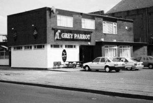 Grey Parrott Hulme